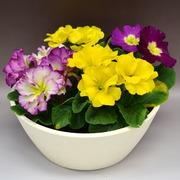 花鉢0002