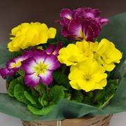 花鉢0003